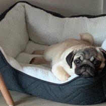 Vacunas en mascotas: parte fundamental de la tenencia responsable