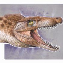 """El """"abuelo"""" de los cocodrilos modernos: nueva especie es hallada en rocas andinas del sur de Chile"""