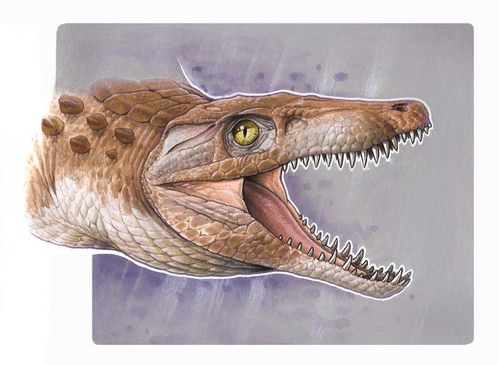 El «abuelo» de los cocodrilos modernos: nueva especie es hallada en rocas andinas del sur de Chile