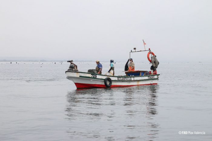 Caleta Tongoy recibe reconocimiento por implementar prácticas para enfrentar el cambio climático
