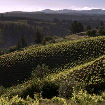 Viña chilena recibió el másalto reconocimiento en Decanter World Wine Awards 2021