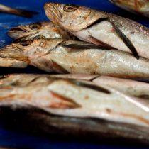 """Industriales pesqueros acusan """"negacionismo técnico""""en discusión legislativa sobre recursos del mar"""
