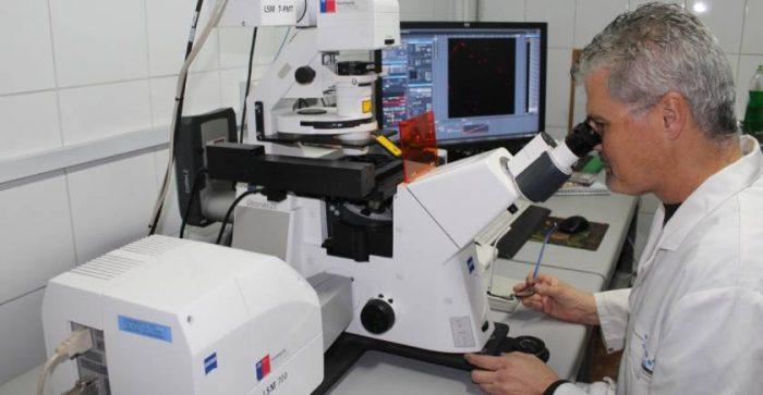 Investigación chilena propone nuevo material para detección y tratamiento contra el Alzheimer con nanopartículas de oro