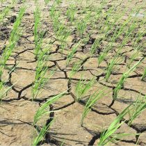 Científico chileno participa en investigación internacional para entender cómo las plantas perciben la sequía y falta de nutrientes