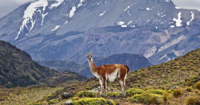 Time Magazine reconoce al Parque Nacional Patagonia como uno de los 100 destinos más extraordinarios del mundo