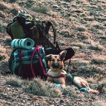 Día Mundial del Perro: recomendaciones para viajar con tu mascota regalona