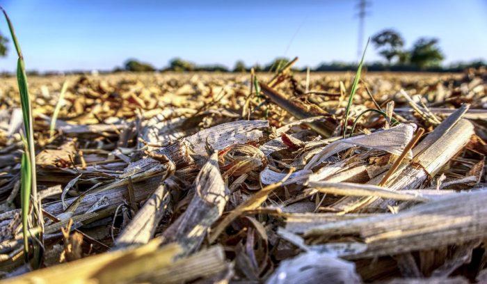 Estudian crear ecotableros a base de residuos del sector vitivinícola y semillero
