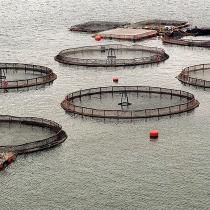 Informe de INDH advierte que salmoneras afectan disponibilidad del agua