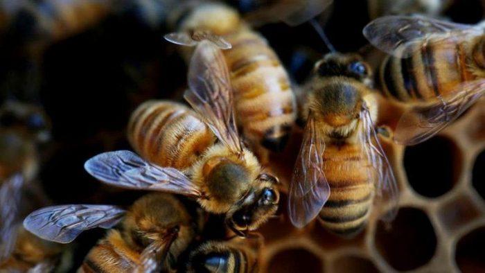 Cócteles de pesticidas: la combinación mortal que está matando a las abejas en todo el mundo