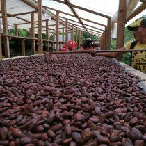 Cacao, chocolate y crisis climática