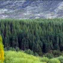 Centros científicos chilenos llaman a suspender forestación con especies exóticas en la Patagonia por cambio climático