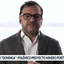 "Pingüino de Humboldt: gerente de Andes Iron asegura que con o sin Dominga ""esta especie va a desaparecer"""
