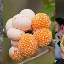 Conservación del bosque nativo, digüeñes y mujeres recolectoras