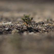 Innovación para enfrentar la sequía