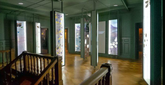 Exhibición de entomología en Museo Fonck