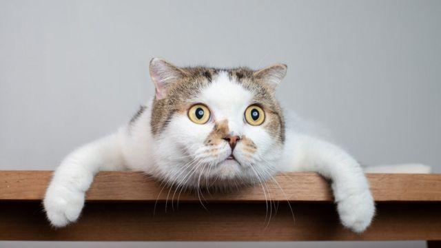 Día Mundial del Gato: ¿Cómo adaptarse a la llegada de un nuevo felino a la familia?