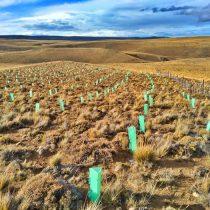 Miguel Torres, Patagonia y la irresponsable mitigación del cambio climático