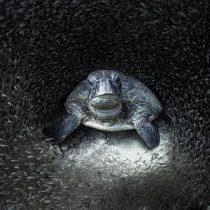 Ocean Photographer of the Year: las mejores fotos de la vida marina de 2021