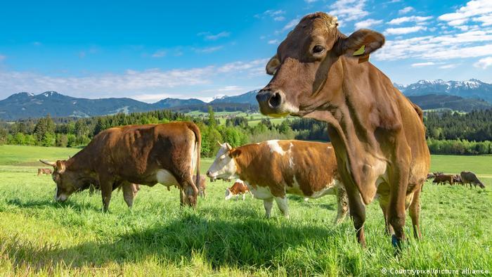 Revelan el nivel real de las emisiones de gases de efecto invernadero de la cría de animales
