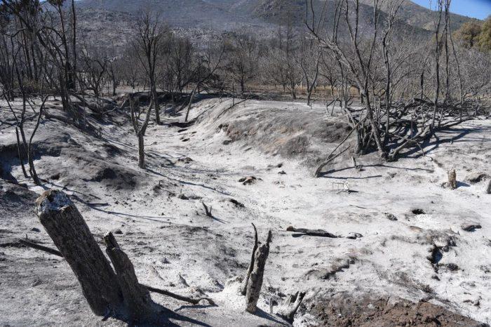 Un día desde el incendio forestal de Tiltil: 15 casas quemadas y más de 400 hectáreas afectadas