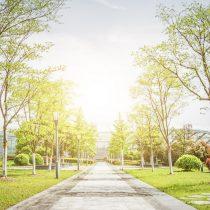 Acceso a áreas verdes en zonas de la capital generan aumento en las cotizaciones y ventas de departamentos