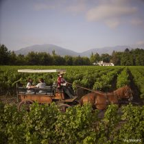 Viñas se preparan para celebrar Fiestas Patrias