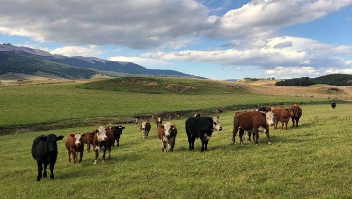 El dogma de las carnes rojas y el nuevo enfoque de la matriz alimentaria