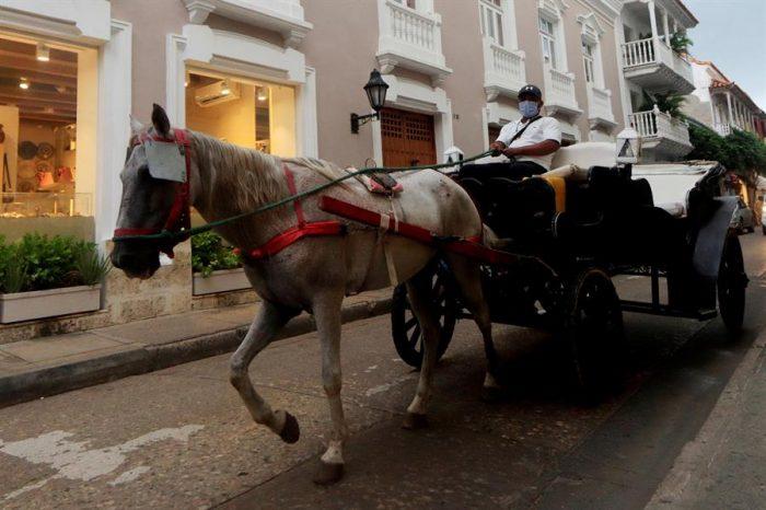 Los tradicionales coches de caballos: ¿un oficio o maltrato animal?