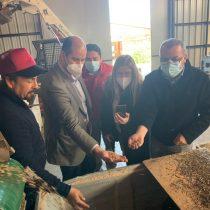 Innovador proyecto ejecuta procesos de degradación de basura mediante la polinización con moscas