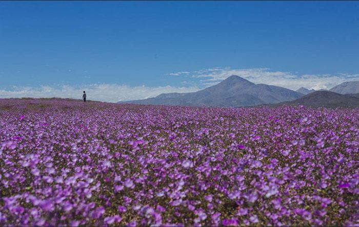 ¿Regar el desierto? Destruyendo el patrimonio natural y evolutivo de Chile