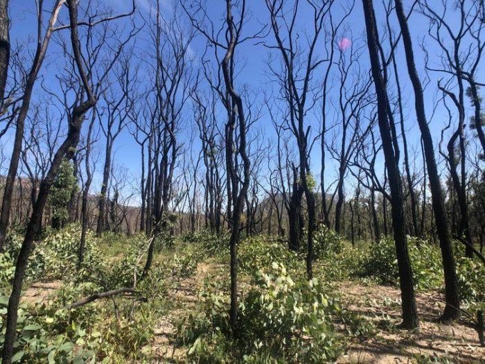 El cambio climático está poniendo a prueba la resistencia al fuego de los bosques autóctonos