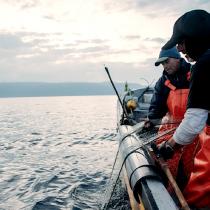 Llaman a respetar veda de la merluza chilena