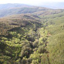 Presentan primera guía para monitorear restauración de bosques en Chile
