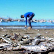 Tarjeta roja: informe revela el impacto de la industria salmonera en los DD.HH.