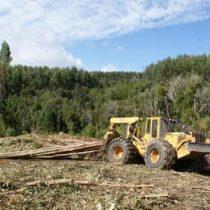 Llaman a incluir las plantaciones forestales en el Sistema de Evaluación de Impacto Ambiental