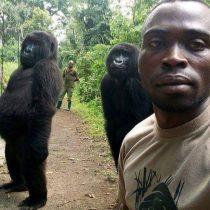 Ndakasi: la historia de la gorila que se volvió famosa por un selfie con un guardabosques y murió en brazos de su cuidador