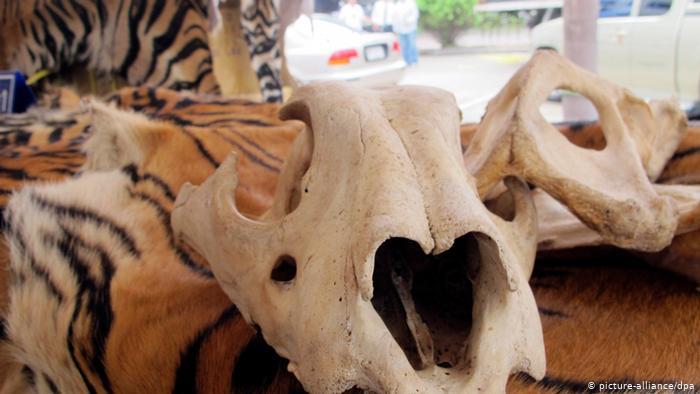 Medicina china tradicional con insumos animales cultivados en laboratorio