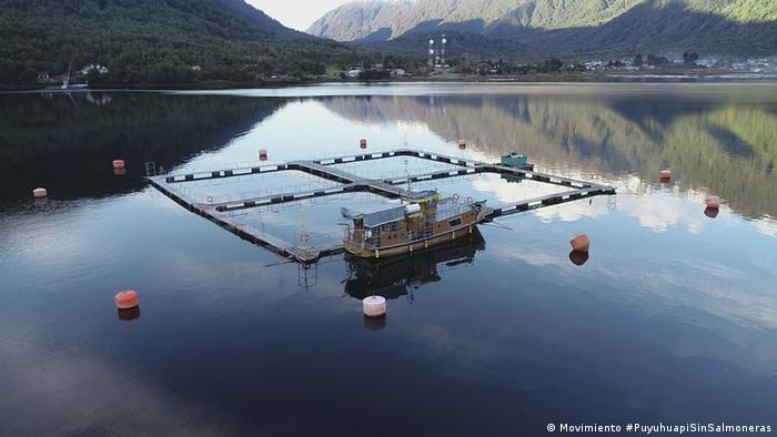 Patagonia chilena: ambientalistas exigen que salmoneras salgan de áreas protegidas