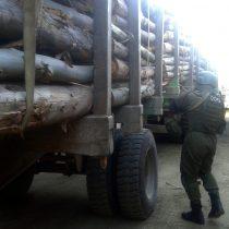 Cámara de Diputados despacha al Senado proyecto que aumenta sanciones por el robo de madera