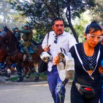Colmevet alerta por uso de caballos en manifestaciones por parte de Carabineros