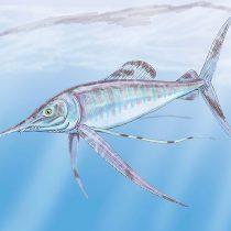 Paleontólogos realizan inéditos hallazgos de peces que habitaron la zona central del país en la época de los dinosaurios