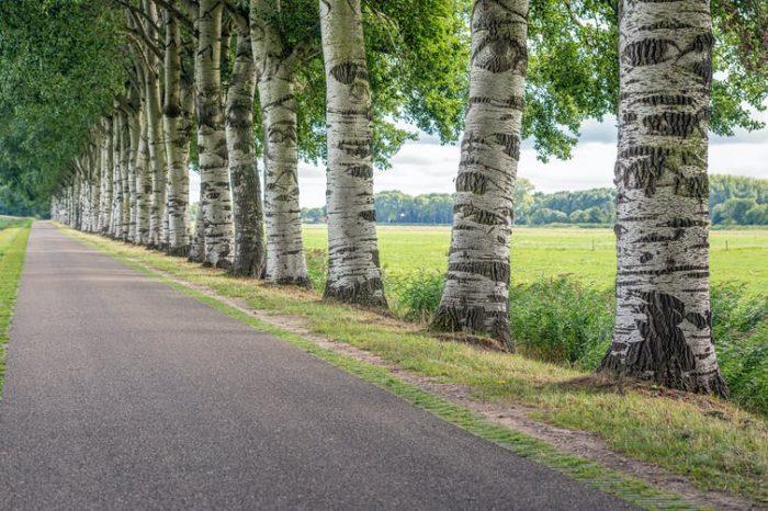 Los árboles pueden ayudarnos a eliminar contaminantes cancerígenos