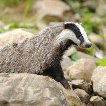 ¿Por qué es importante vigilar la salud de la fauna silvestre?