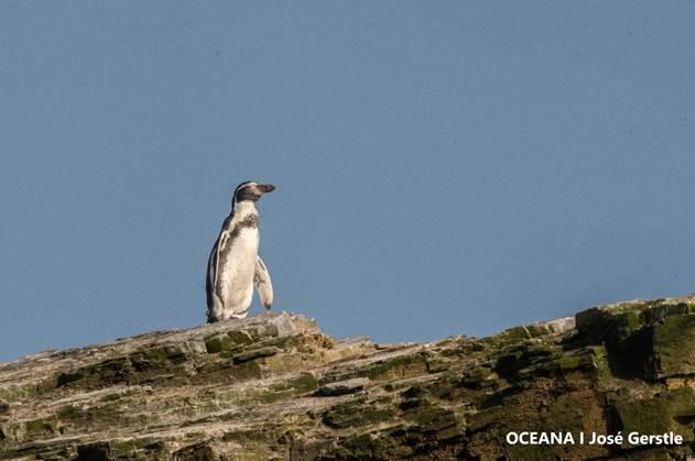 Destacadas científicas llaman a proteger el Archipiélago Humboldt y a rechazar los proyectos Dominga y Cruz Grande