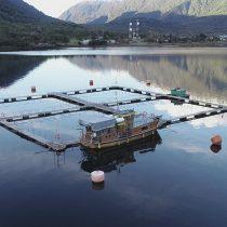 Greenpeace denuncia a salmonera en Puyuhuapi